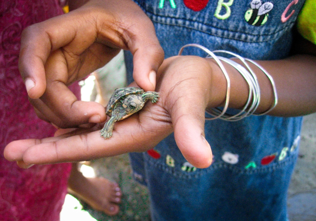 Sarai holds a baby turtle found in the backyard.